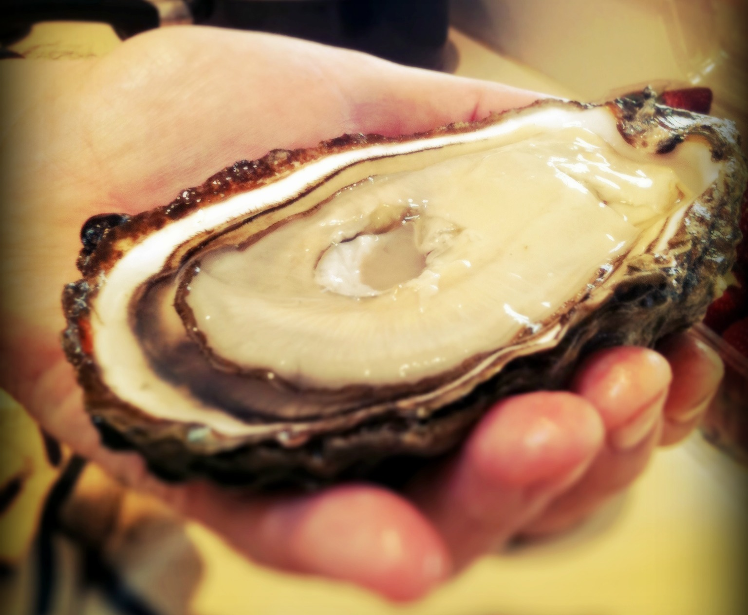Pacific Oysters.