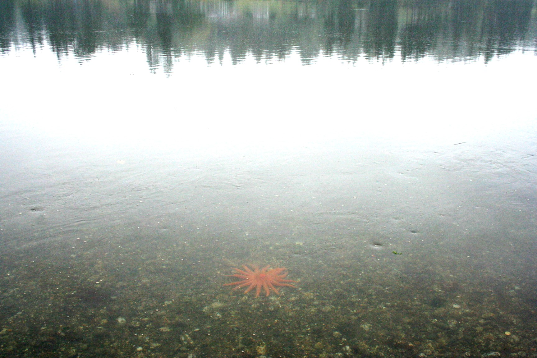 Starfish in Hammersley Inlet.