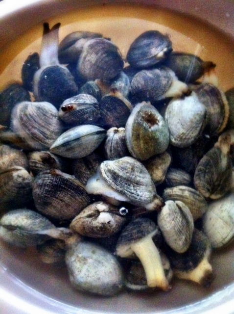 Local Clams, Agate Beach House